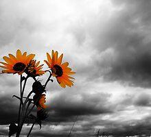 Sunflowers......I love sunflowers! by LameyWorx