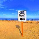 This Way by Susan Zohn