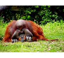 Old Man of the Forest, Orangutan, Dublin Zoo Photographic Print