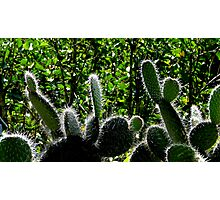 Prickly Juans Photographic Print