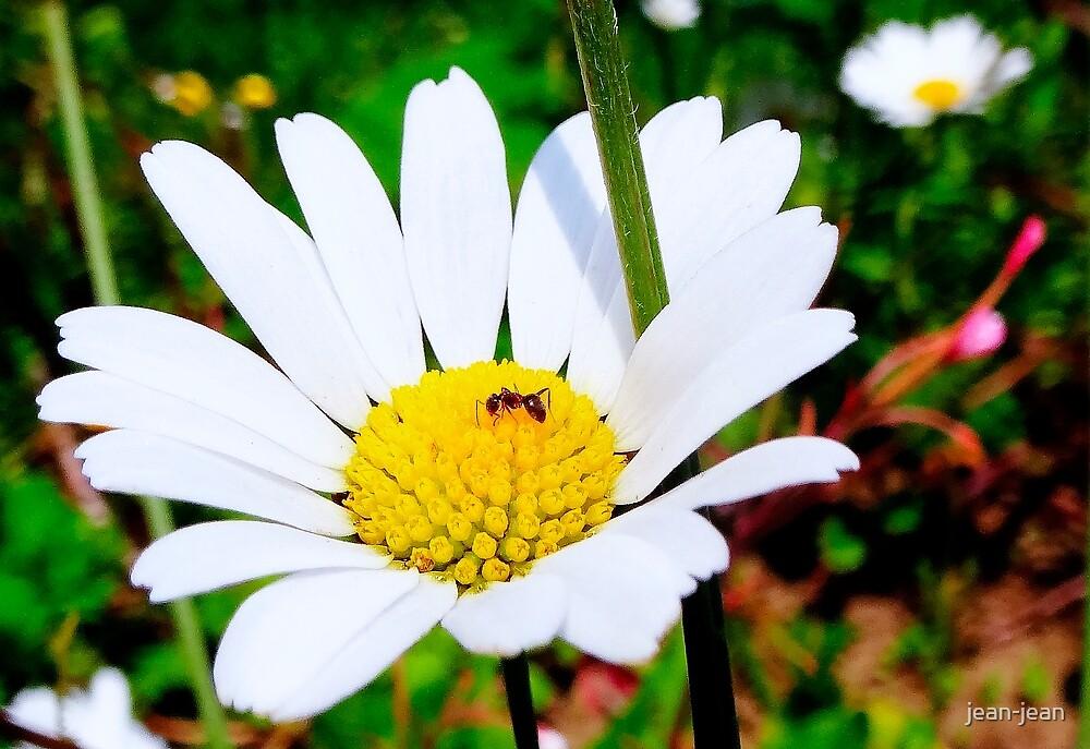 on the flower... by jean-jean