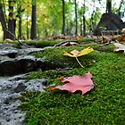 Moss Covered Forest Bed by MoniqueFlynn