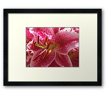 A Picture of Lily Framed Print