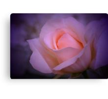 Sweet Pink Rose on Purple Canvas Print