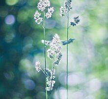 Grass Bokeh by indiabluephotos