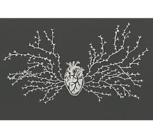 Anatomical Botanical Heart Paper-cut Photographic Print