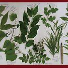 Plant Study by evon ski