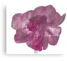 Pink and Purple Anenome Flower Print Canvas Print