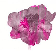 Stripey Anemone Flower by CeiraCrainer