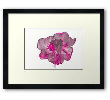 Stripey Anemone Flower Framed Print