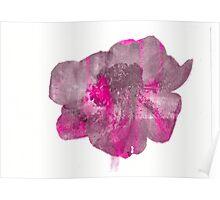 Stripey Anemone Flower Poster