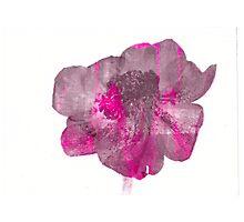 Stripey Anemone Flower Photographic Print