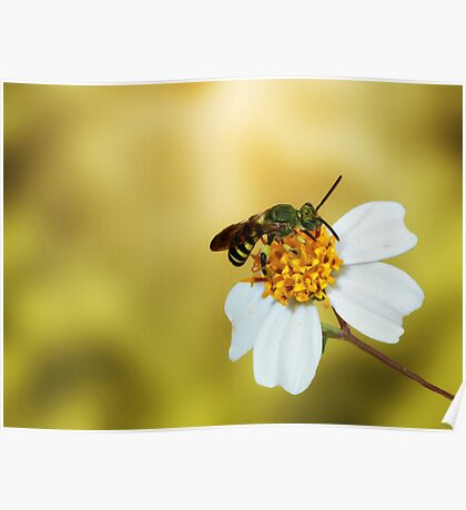 the beauty of nature Poster