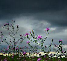 """Awaiting The Storm"" by Gail Jones"