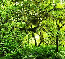 Hoh Rainforest by kchase