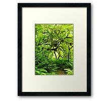 Hoh Rainforest Framed Print