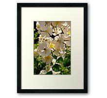 Governor General's Roses  #6 Framed Print