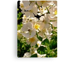 Governor General's Roses  #6 Canvas Print
