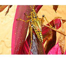 Creature of Nature Photographic Print