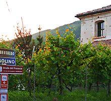 Valdobbiadene Vineyards by svchristian