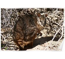 Tamar Wallaby Poster