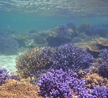 Staghorn Coral #2 by Joel Mason