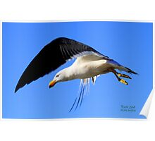 The Pacific Gull Poster