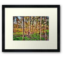 Eucalyptus Dreaming Framed Print