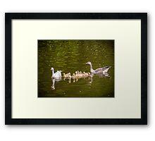 Greylag Goose Family Framed Print