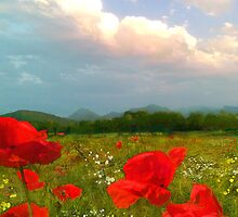 I Love Poppies  by AngieBraun
