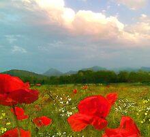 I Love Poppies  by AngieBraun
