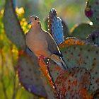 Dove by Jarede Schmetterer