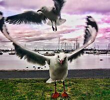 Hobson's Bay Gulls by V1mage