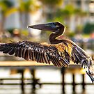 brown pelican by Alexandr Grichenko