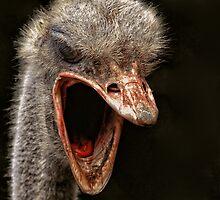 Angry by LR-Eddie