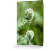 Poppy Buds Greeting Card