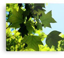 Sunlit Leaves Metal Print