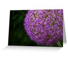 allium flower Greeting Card