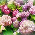 Gardens - Pink and Lavender Hydrangea by Susan Savad