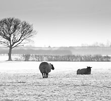 Snow scene with sheep by paulwhittle
