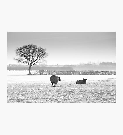 Snow scene with sheep Photographic Print