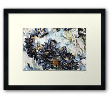 Cluster of Mussels Framed Print