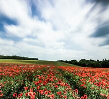 Poppy fields in the wind.  by Ian Hufton