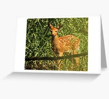 Fawn Wading in Marsh Greeting Card