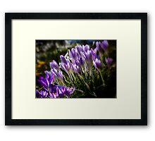 Spring Promise Framed Print