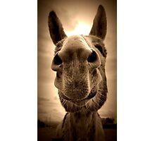 Wonkey Donkey Photographic Print