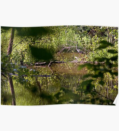 Guest at the Beaver Pond Poster