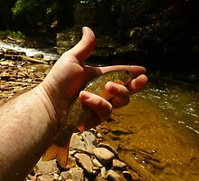 Canyon Brook Trout by Chad Burrall