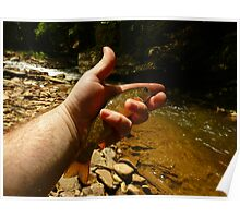 Canyon Brook Trout Poster