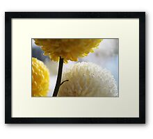 Macro Photography - Flowers Framed Print